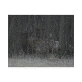 Elk Calves in the Trees Canvas Print