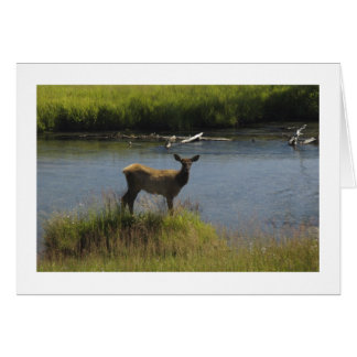 Elk Stationery Note Card
