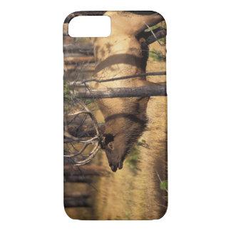 elk, Cervus elaphus, bull bugles in a burnt out iPhone 7 Case