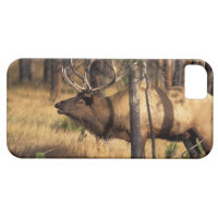 elk, Cervus elaphus, bull bugles in a burnt out iPhone SE/5/5s Case