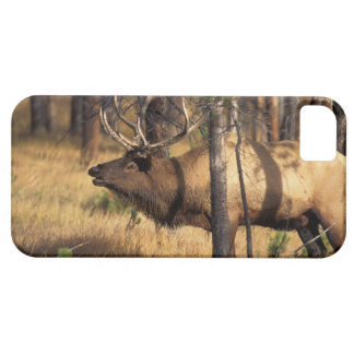 elk, Cervus elaphus, bull bugles in a burnt out iPhone SE/5/5s Case