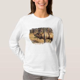 elk, Cervus elaphus, bull bugles in a burnt out T-Shirt