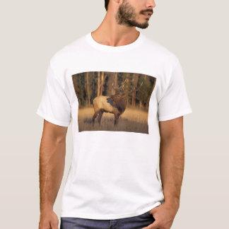 elk, Cervus elaphus, bull calling in T-Shirt