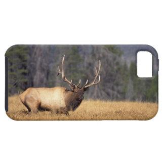 elk, Cervus elaphus, bull in a field in iPhone SE/5/5s Case