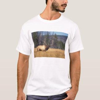 elk, Cervus elaphus, bull in a field in T-Shirt