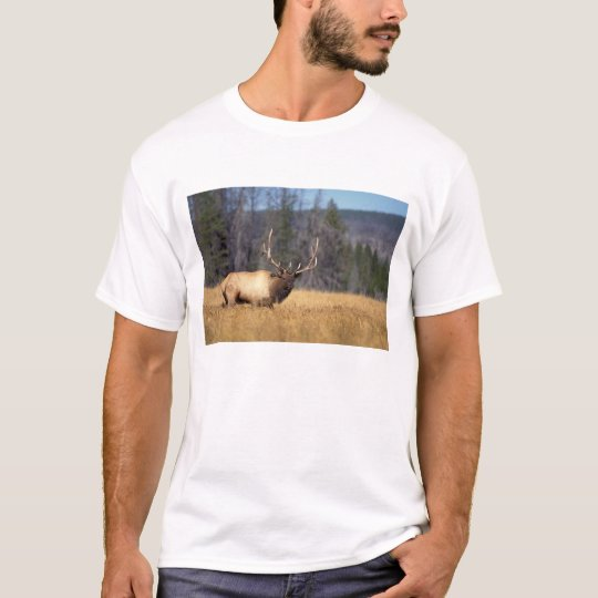 elk, Cervus elaphus, bull in a field in T-Shirt