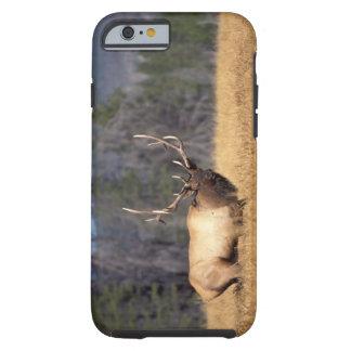 elk, Cervus elaphus, bull in a field in Tough iPhone 6 Case