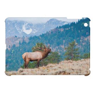 Elk (Cervus Elephus) Bull Bugling iPad Mini Case
