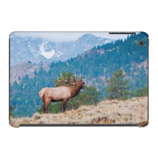 Elk (Cervus Elephus) Bull Bugling iPad Mini Cover
