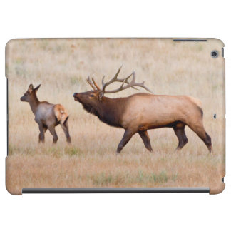 Elk (Cervus Elephus) Bull Herding Harem 2 iPad Air Cover