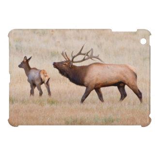 Elk (Cervus Elephus) Bull Herding Harem 2 iPad Mini Case