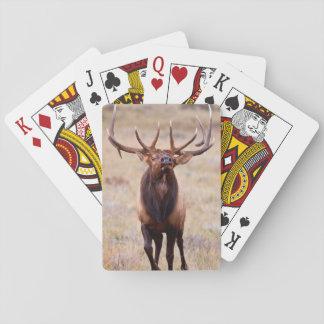 Elk (Cervus Elephus) Bull Herding Harem Playing Cards