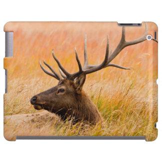 Elk (Cervus Elephus) Resting In Meadow Grass