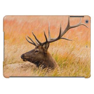 Elk (Cervus Elephus) Resting In Meadow Grass Cover For iPad Air