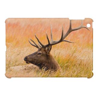 Elk (Cervus Elephus) Resting In Meadow Grass iPad Mini Cover