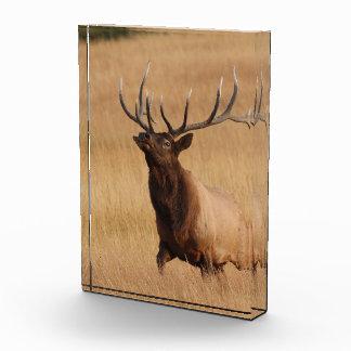 elk charging acrylic award