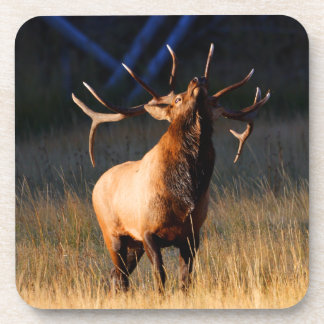 Elk Charging Coaster