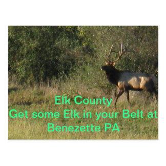 Elk County Benezette PA Postcard