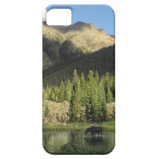 Elk Creek Moose - Weminuche Wilderness - Colorado iPhone SE/5/5s Case