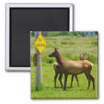 Elk Crossing California Wildlife Magnet