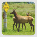 Elk Crossing California Wildlife Square Sticker