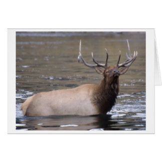 Elk crossing river stationery note card