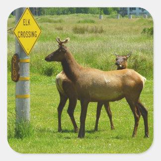 Elk Crossing Sticker