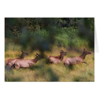 Elk dashing for cover greeting card