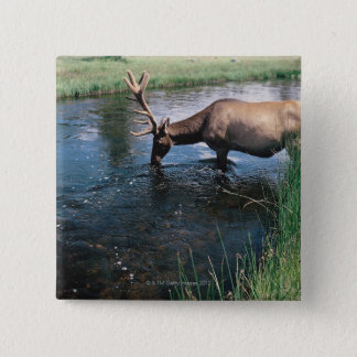 Elk drinking from stream , Yellowstone National Button