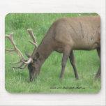 Elk Eating Grass Mousepad