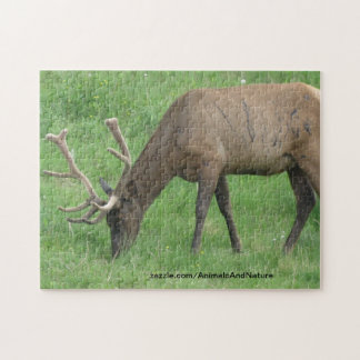 Elk Eating Grass Puzzle