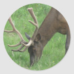 Elk Eating Grass Sticker