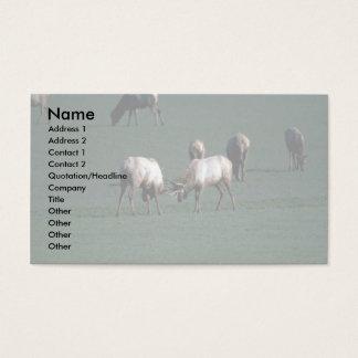 Elk Fighting Business Card