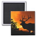Elk Fridge Magnets