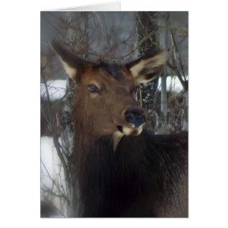 Elk Greeting Cards