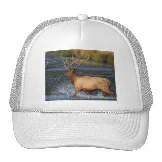 elk trucker hat