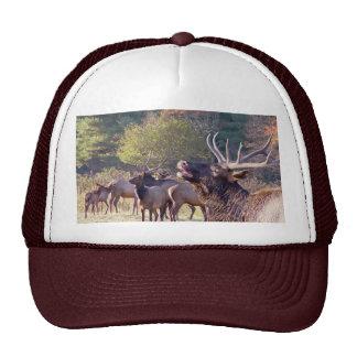 Elk Herd Hat