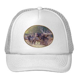 Elk Herd Hat 2