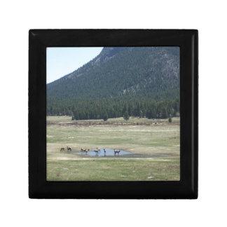 Elk Herd in Estes Park, CO Gift Box