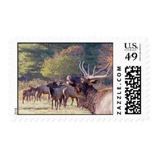 Elk Herd Postage