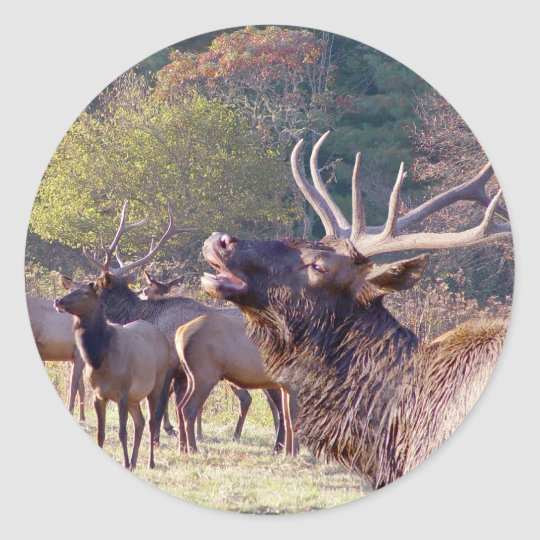 Elk Herd Sticker