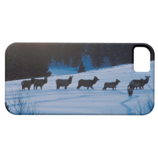 Elk herd walking through field iPhone SE/5/5s case