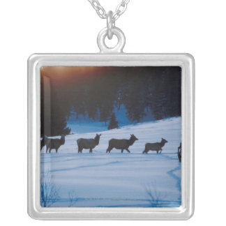 Elk herd walking through field silver plated necklace