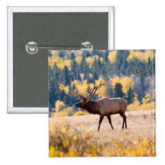 Elk in Rocky Mountain National Park, Colorado 2 Inch Square Button
