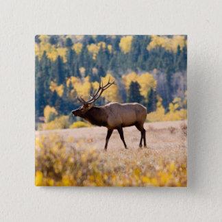 Elk in Rocky Mountain National Park, Colorado Button