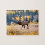 Elk in Rocky Mountain National Park, Colorado Jigsaw Puzzle