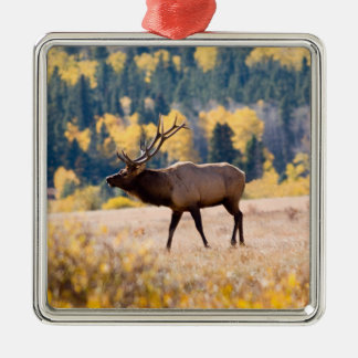 Elk in Rocky Mountain National Park, Colorado Square Metal Christmas Ornament