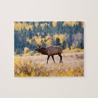 Elk in Rocky Mountain National Park, Colorado Puzzle