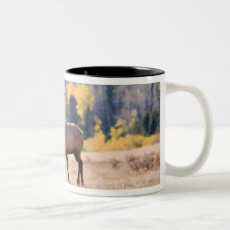 Elk in Rocky Mountain National Park, Colorado Two-Tone Coffee Mug