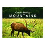 Elk in the Great Smoky Mountains Postcard